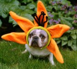 Bulldog Flower