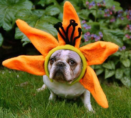 Bulldog Flower